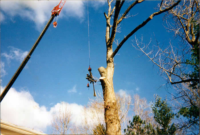 Vermont tree cutting services