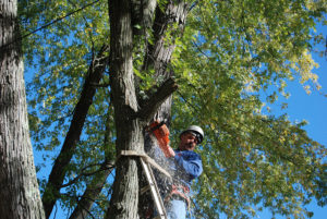 VT tree cutting services