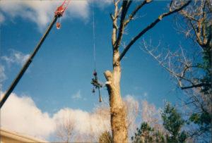 Vermont Tree Cutting Service Company