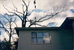 Vermont Tree Cutting Services Burlington