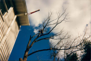 Vermont Tree Cutting Services Company