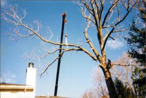 Burlington Vermont tree cutting services