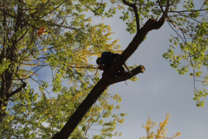 burlington vt tree cutting services