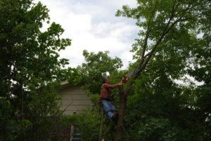 vermont tree services